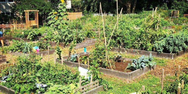 Scapular Gardens