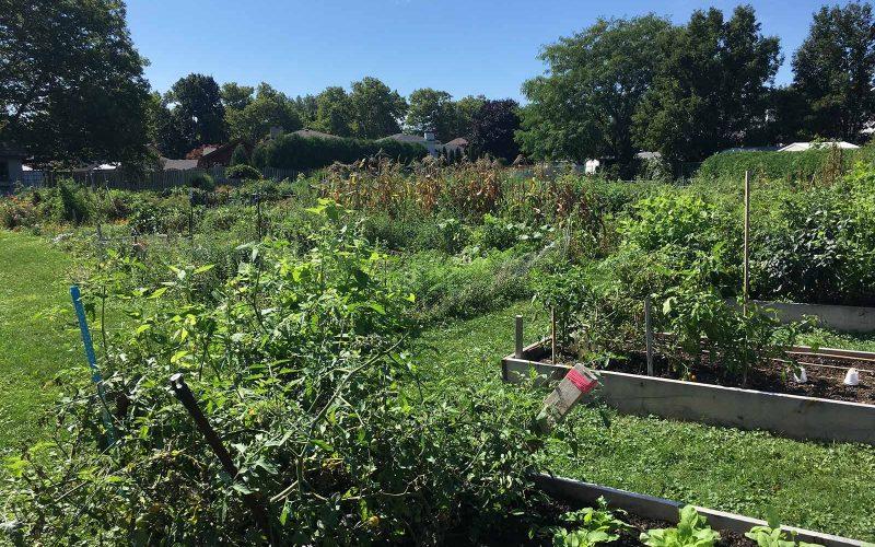 Grantham Community Gardens