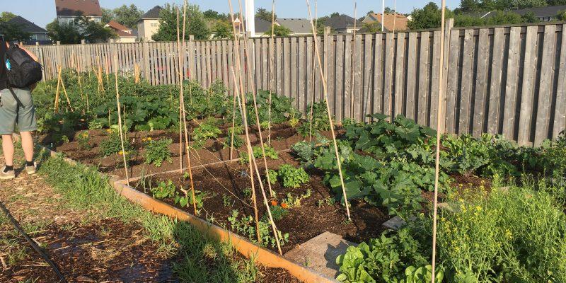 community garden 7