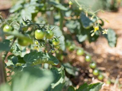 Fruitful Harvest 2