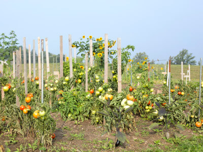 Fruitful Harvest 3