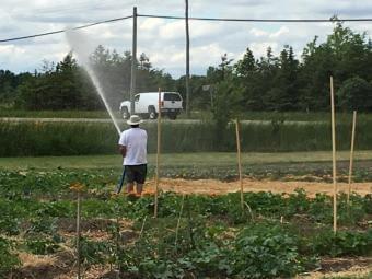 Harvest Garden 1